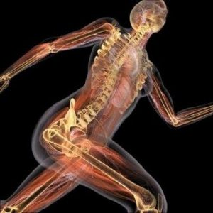tejidos-la-especializacion-del-cuerpo-humano-28