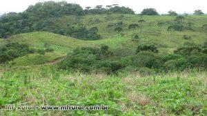 53324-168547-825342-area-rural-em-cerro-negro-sc