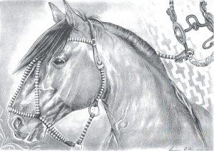 Desenho de cavalo 4 001