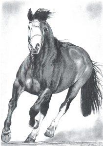 Desenho de cavalo 6 001