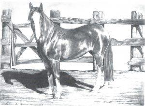 Desenho de cavalo 7 001