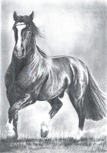 Desenho de cavalo 8 001