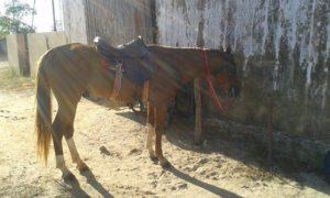 cavalo- na-barra