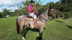 jovem-cavaleiro-e-seu-cavalo.