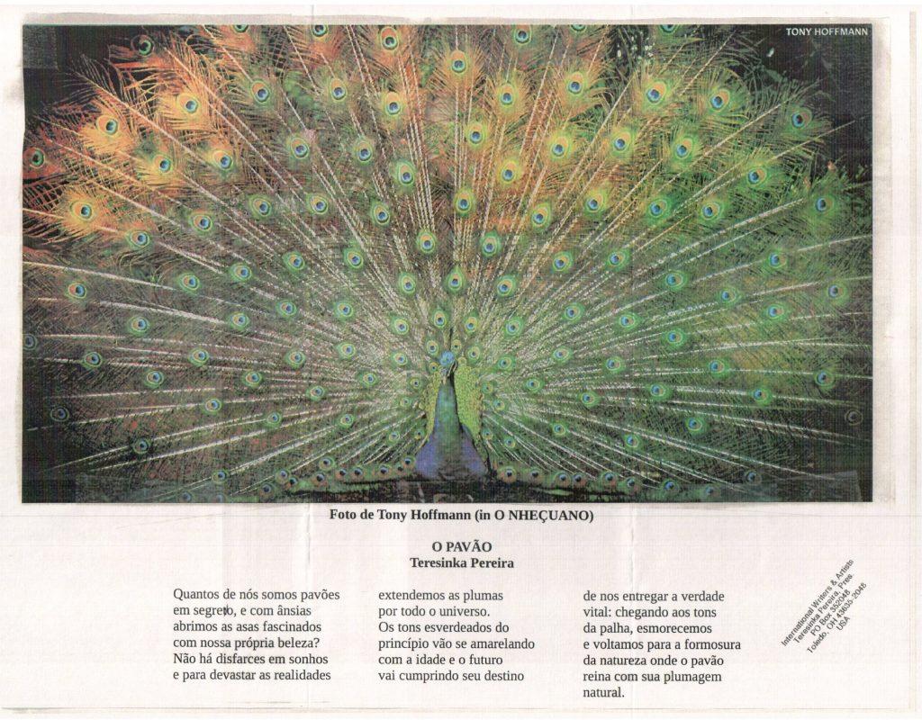 o pavão poesia de Teresinka Pereira